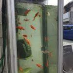 電話ボックスになぜ金魚? 現代美術作家が著作権問題で訴訟を・・・