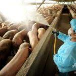 豚インフルエンザと鳥インフルエンザの関連性~ 不衛生な中国がまたもパンデミック(世界的大流行)を引き起こす?