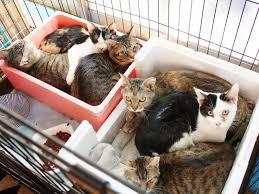 保護 猫 千葉